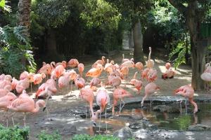 zoo12 2013