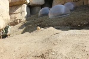 zoo15 2013