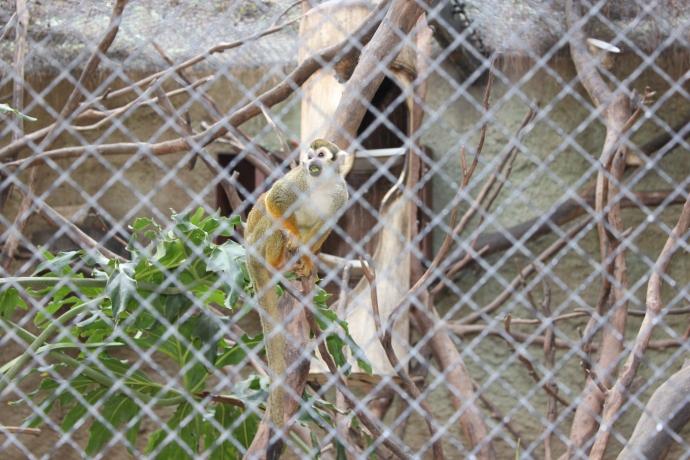 zoo3 2013