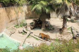 zoo5 2013